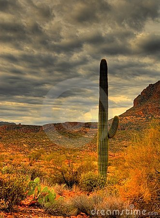 Free Saguaro Cactus 20 Stock Photos - 1921943