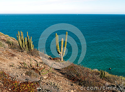 Saguaro cactus and blue sea Baja California