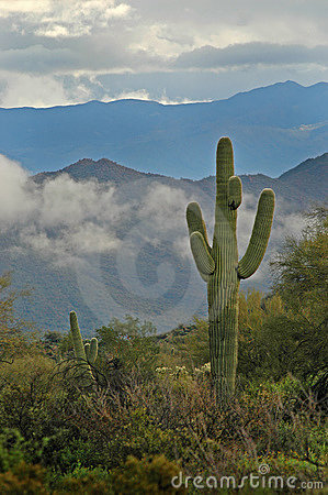 Saguaro Cactus and Superstition Mountains 3