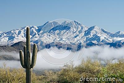 Saguaro and Four Peaks