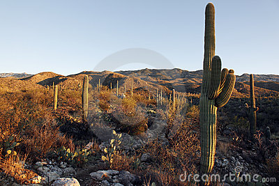 Saguaro Hills at Sunset