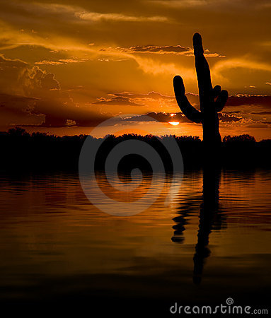Saguaro & Water Sunset