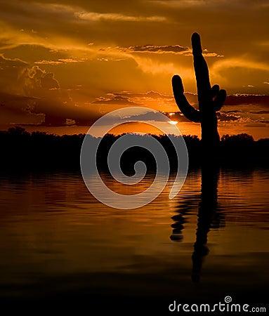 Free Saguaro & Water Sunset Stock Images - 10382724