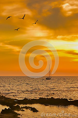 Sailboat leaving at dusk with some seagulls in foreground