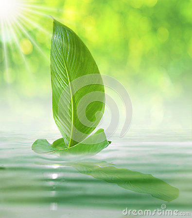 Sailing Leaf In The Bright Day Royalty Free Stock Photo - Image: 25432155