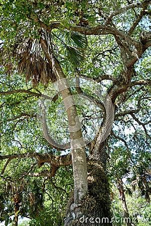 Saint Augustine love tree