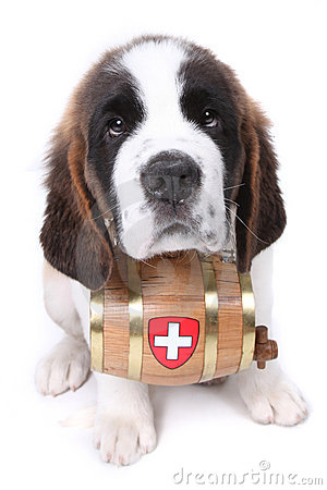 A Saint Bernard puppy with rescue barrel