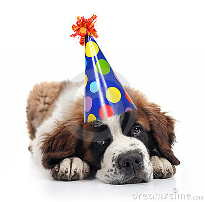 Free Saint Bernard Wearing A Polka Dot Birthday Hat Stock Images - 14013144