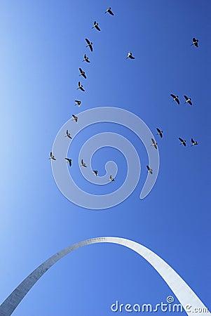 Saint Louis Gateway Arch Geese