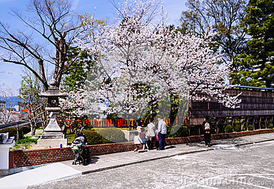 Sakura Blossoms at Fushimi Inari shrine Editorial Photo