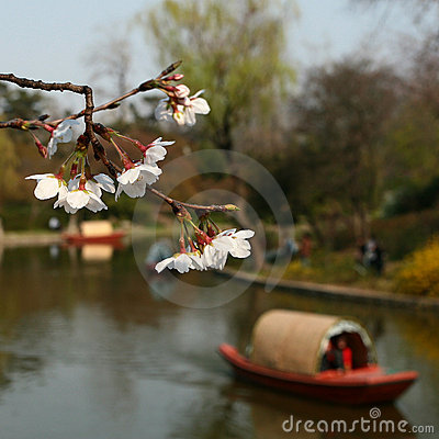 Sakura and Boat