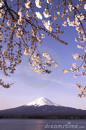 Sakura & Mt Fuji
