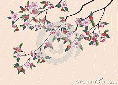 Sakura, spring,