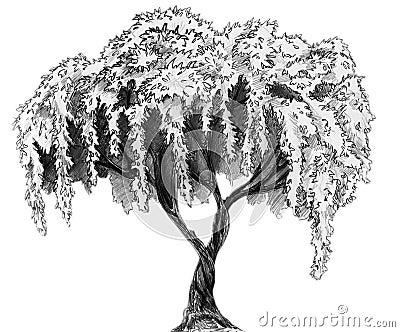 Sakura tree - pencil sketch