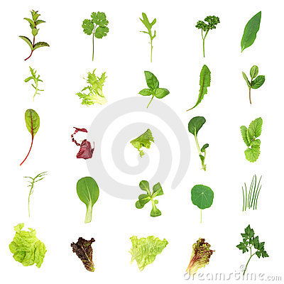 Free Salad Lettuce And Herb Leaves Royalty Free Stock Photo - 6363235