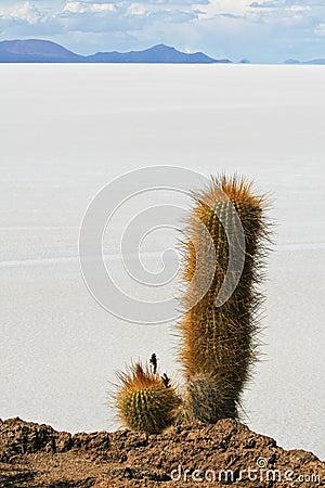 Salar de Uyuni in Bolivian Andes