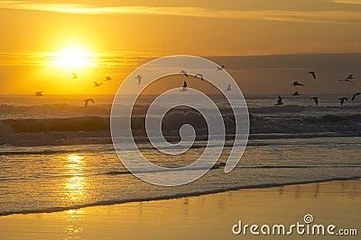 Salida del sol en la playa en Daytona Beach la Florida