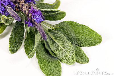 Salie en Lavendel