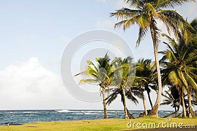 Sallie Peachie beach palm trees Corn Island