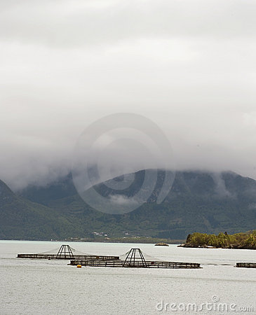 Free Salmon Farm Royalty Free Stock Images - 14968039