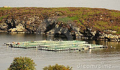 Salmon farm, Eddrachillis bay, Scotland