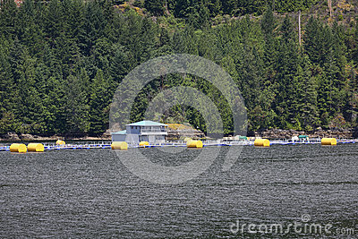 Salmon Fish Farm, British Columbia Coast