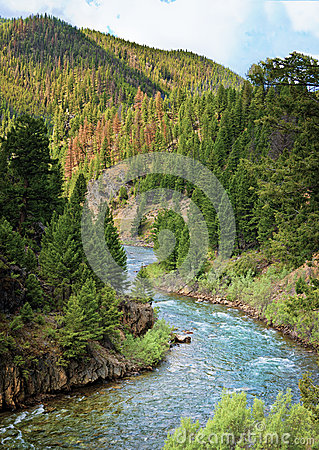 Free Salmon River, Idaho Royalty Free Stock Photography - 26040127