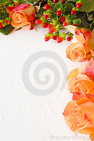 Salmon roses and foliage