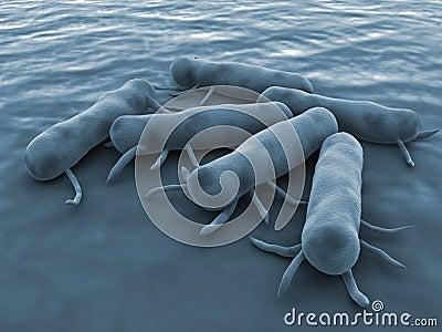 Salmonella Bacteria