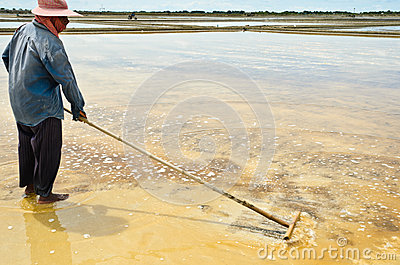 Salt harvesting Editorial Stock Image