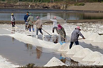 Salt Harvesting - Thailand Editorial Photography