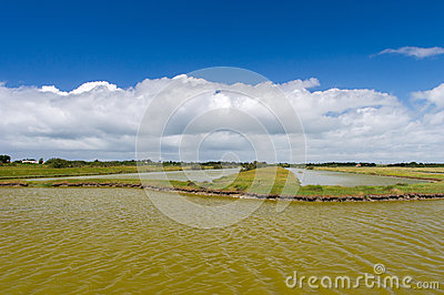 Salt lake at French Oleron island