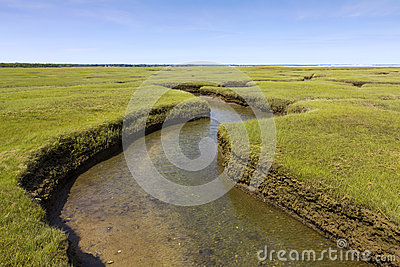 Salt Marsh Land