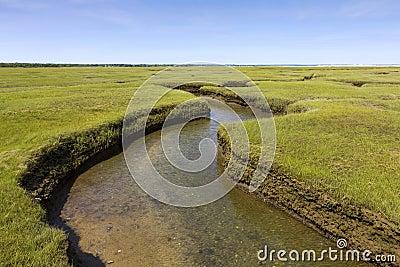 Salt Marsh Land