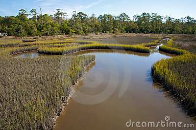 Salt marsh, with meandering streams, North Carolin