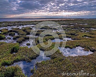 Salt Marsh Pools