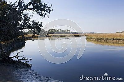 Salt marsh scenic