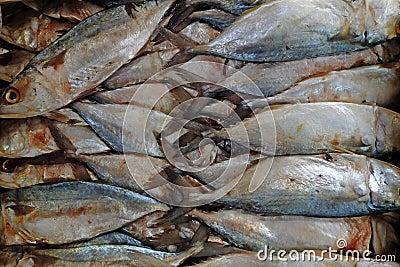 Salted Mackerel fish