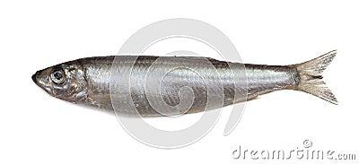 Salted sprat fish