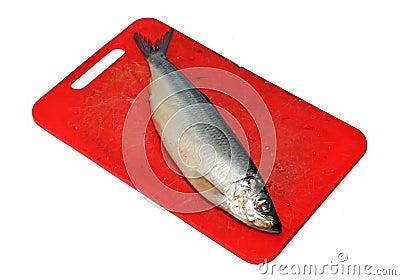 Salty herring