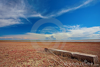 Salty land