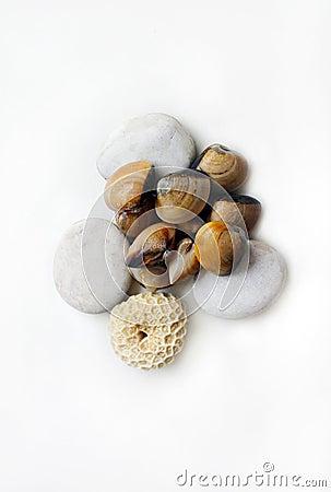 Samlar musslor det raka nya havet