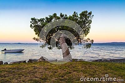 Samotny drzewo przy świtem