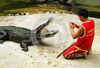 Samut Prakan, Thailand: Crocodile Show Editorial Photo