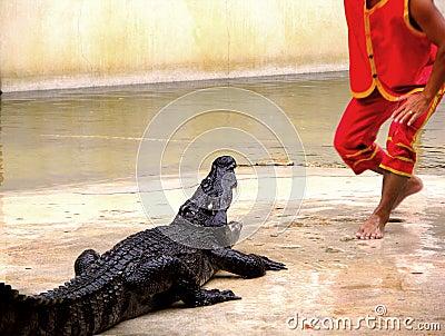 Samutprakan Crocodile Farm and Zoo 1