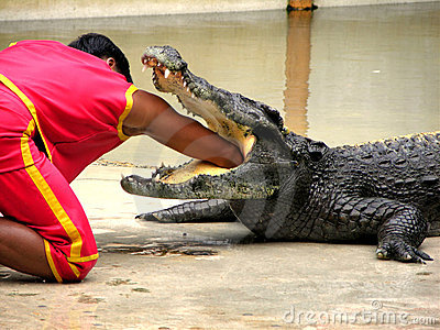Samutprakan Crocodile Farm And Zoo 5 Stock Photos - Image: 79803