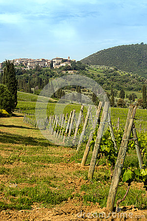 San Antimo vineyards in Tuscany