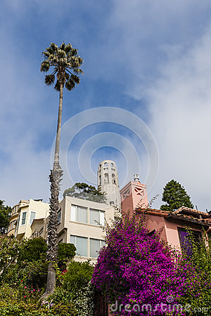 Free San Francisco Cityscape - Telegraph Hill And Coit Tower. Stock Photo - 60029070