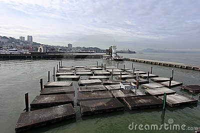 San Francisco Missing Sea Lions on Pier 39 Editorial Photography