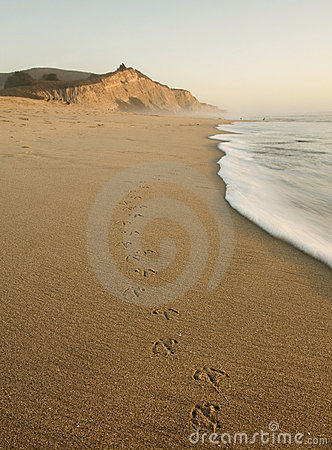 San Gregorio Beach with Bird Tracks